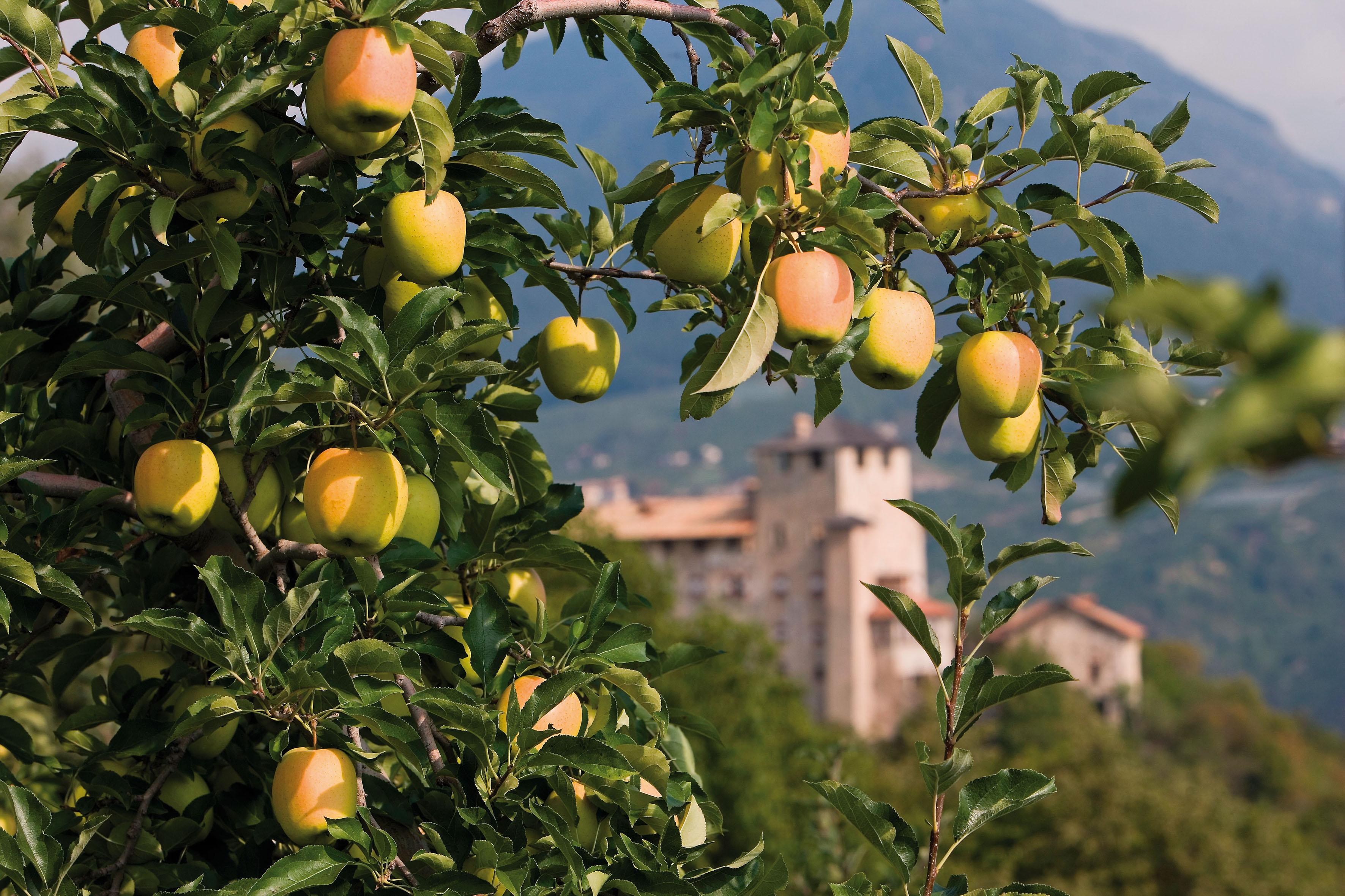 A Pomaria, la festa delle mele in Val di Non. Ma non ditelo a Biancaneve