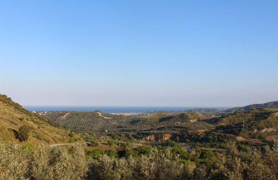 A raccogliere olive sulle colline calabresi