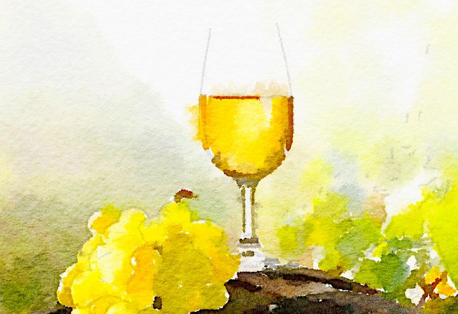 Le istruzioni per capire il vino