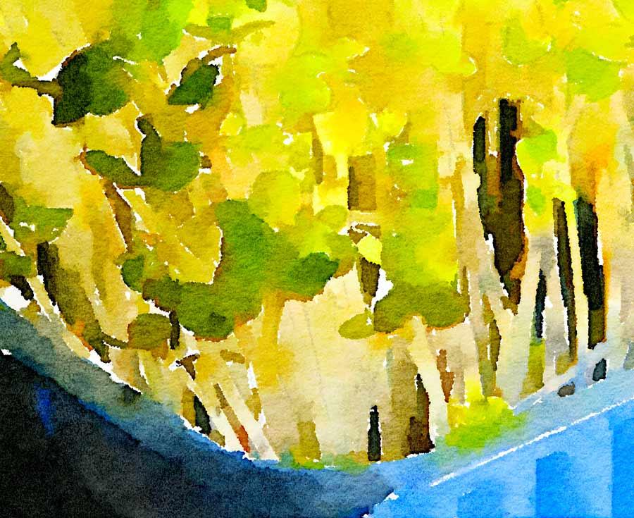 Insalata con germogli di senape