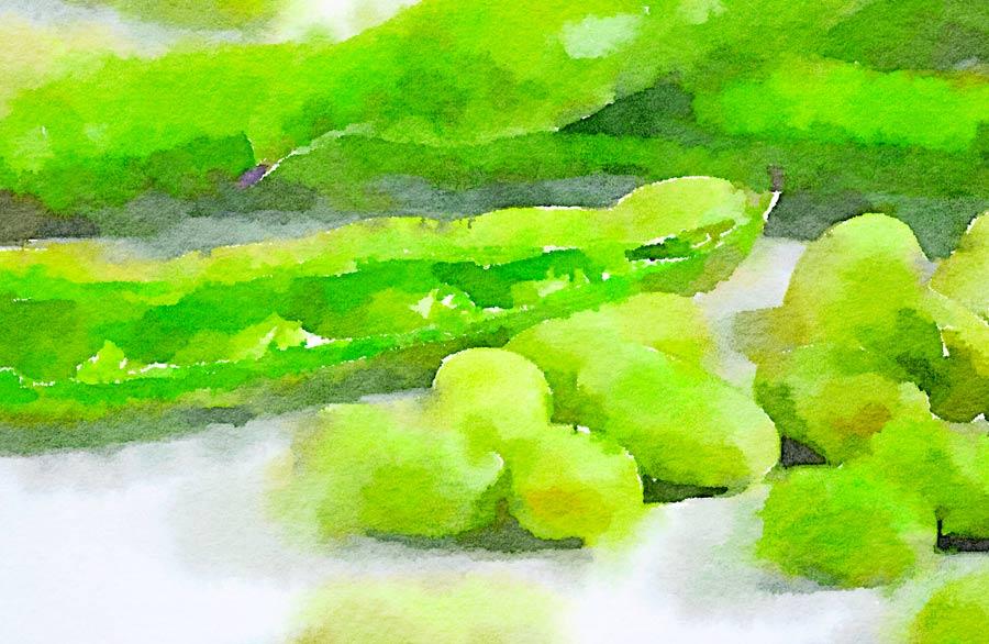 Verdure profumate alla menta